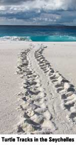 turtletracks2.jpg